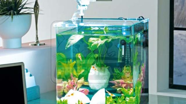 Akvakertészet, víz alatti kertépítés