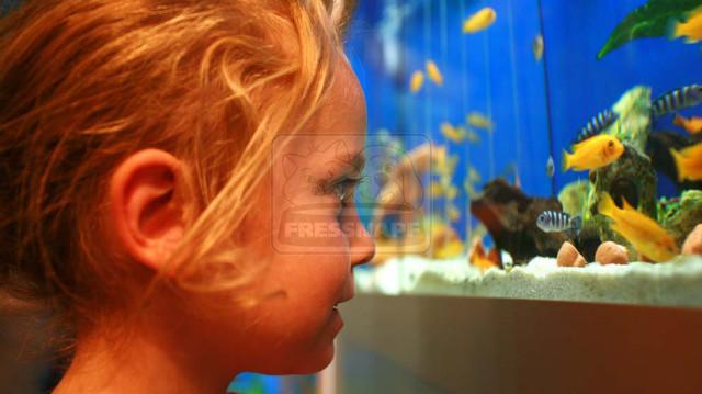 Megfelelő akváriumok halak és gerinctelen állatok számára