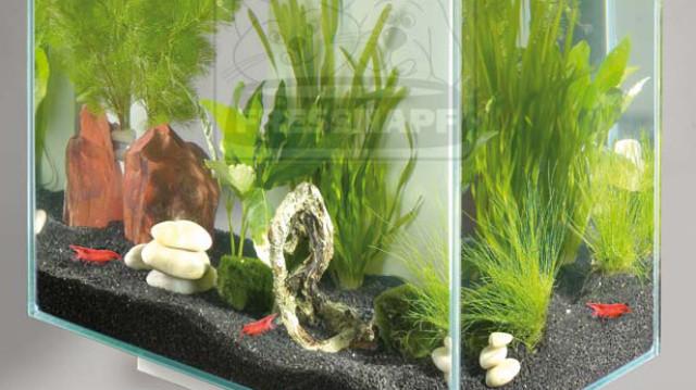 Nano akváriumok – Nagy divat kis léptékben