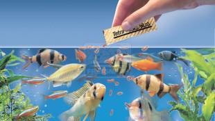 A halak etetésének néhány aranyszabálya
