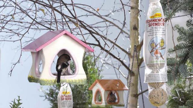 Miért olyan fontos a madarak tavaszi etetése
