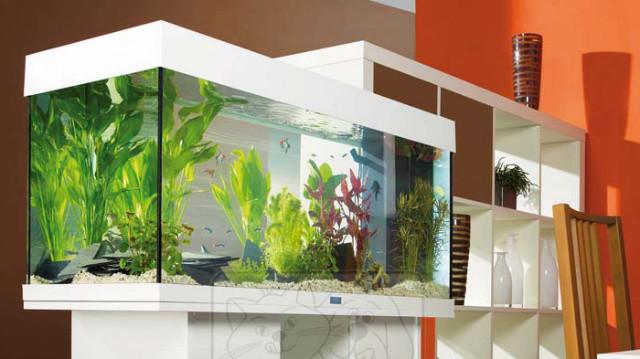 Hogyan válasszunk megfelelő szűrőt az akváriumhoz