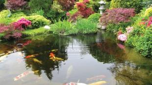 Vigyünk életet a vízbe! Halakat a kerti tóba!