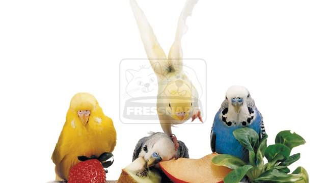 Vitaminok és egyebek: étrend-kiegészítők madaraknak