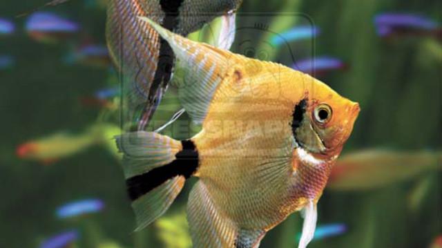 Akvarista alapismeretek