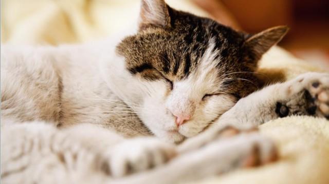 Közérzetjavító tippek cicáknak a hideg évszakra