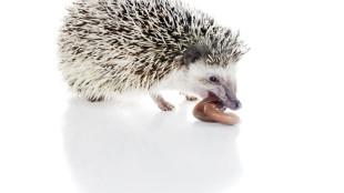Vajon az állatok miből szeretnének XXL méretűt?
