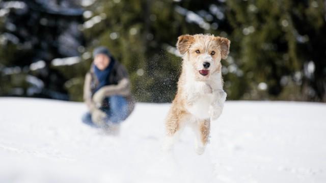 Téli lábápolás egyszerűen: egészséges mancsok télen is