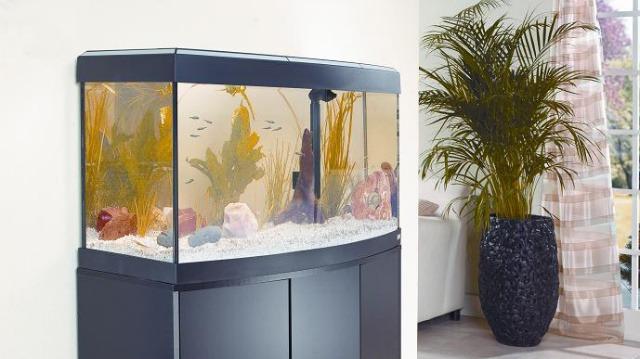 A megfelelő akvárium kiválasztása és elhelyezése