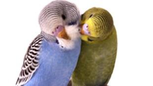Papagáj a házban