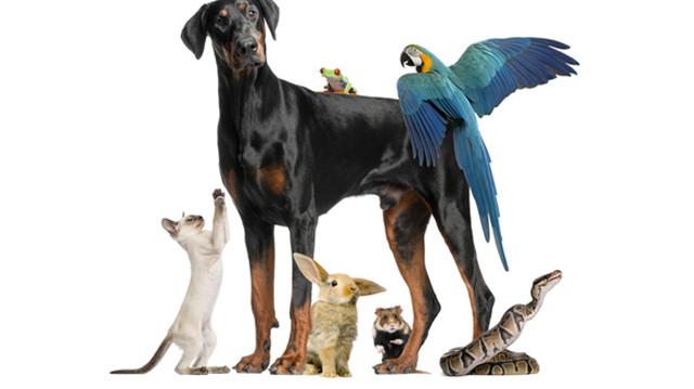 Az igazi állatbarátok áruháza