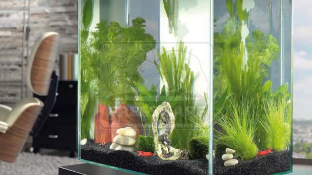 Az ázsiai biotóp akvárium