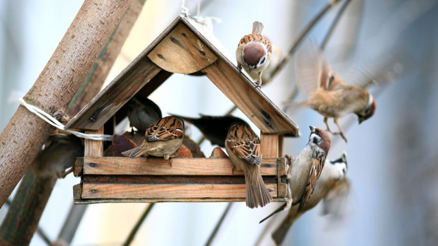 Mindent a madáretetésről
