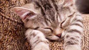 Mire van szüksége egy lakásban tartott kiscicának?