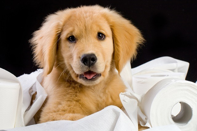 Milyen játékokat vegyünk a kutyusunknak?