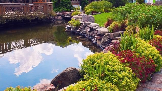 Halak a kerti tóban