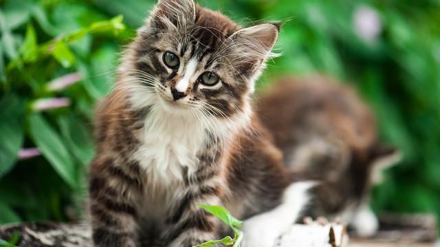 Mit pakoljon a cica bőröndjébe?