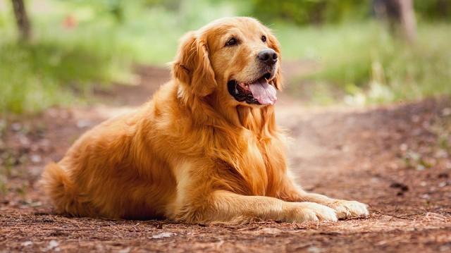 Kutyájának a legjobb jár