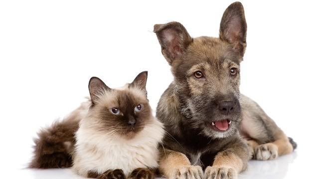 Vesegondok kutyáknál és macskáknál