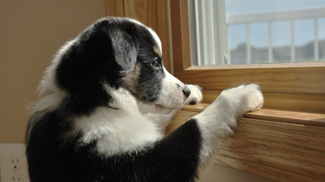 Szomorúságűző tippek egyedül hagyott kutyáknak