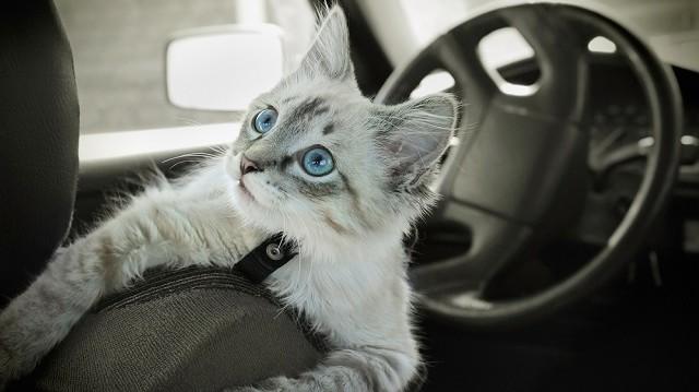 Macskazene hosszú útra: cicával az autóban