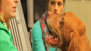 Fressnapf Állatőrség – Utazás boxok