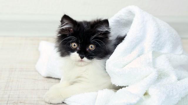 Kell-e a cicát fürdetni?