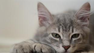A legfurcsább ivószerkezetek cicáknak
