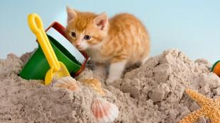 3 dolog, amire szüksége lesz, ha macskával készül a vízpartra