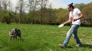 Frizbizés kutyával