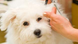 Hogyan alakítsunk ki jó kapcsolatot a kutyánk és a kozmetikusa között?