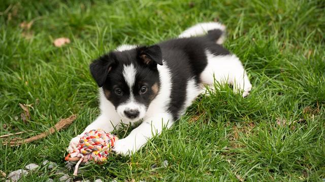 4 szabadtéri játék, amit minden kutya imád