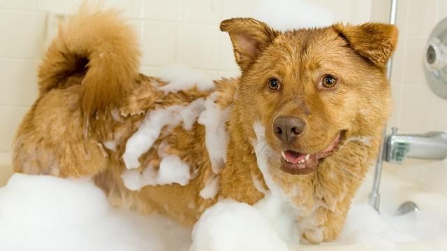 Kutyafürdetést szőrével, avagy lubickolás a fürdőkádban