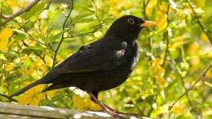 Hogyan teheti kertjét a madarak kedvenc helyévé?