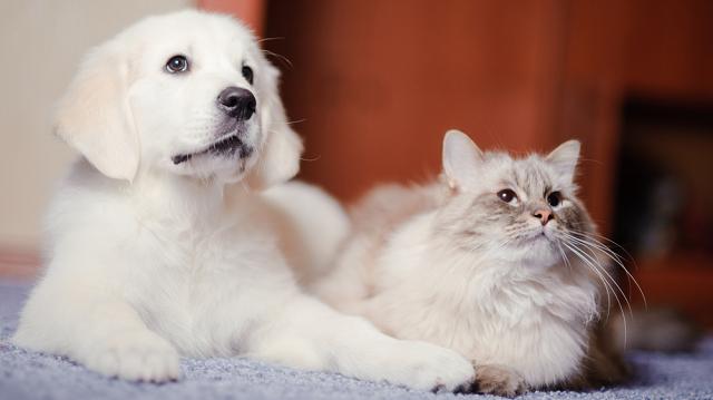 Etetőtan cicáknak és kutyáknak