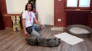 A kutyaetetés legjobb módja