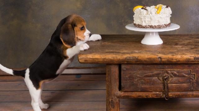 Boldog szülinapot! Lepd meg tortával az állatod!