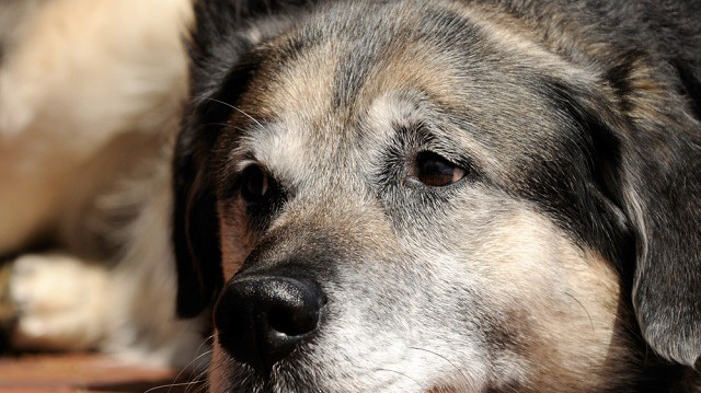 Az időskori kutyaetetés 7 szabálya