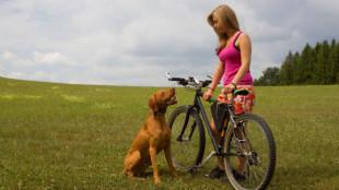 Kerékpárosok rémálma a kutyám