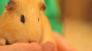 Orvosi tanácsok kisemlősöknek