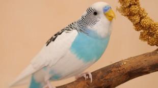 Hogyan fedezik fel a madarak a világot?