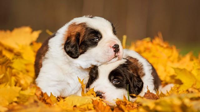 Állatkölykök őszi védelme