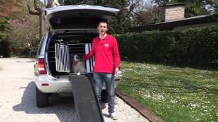 Autózás kutyával