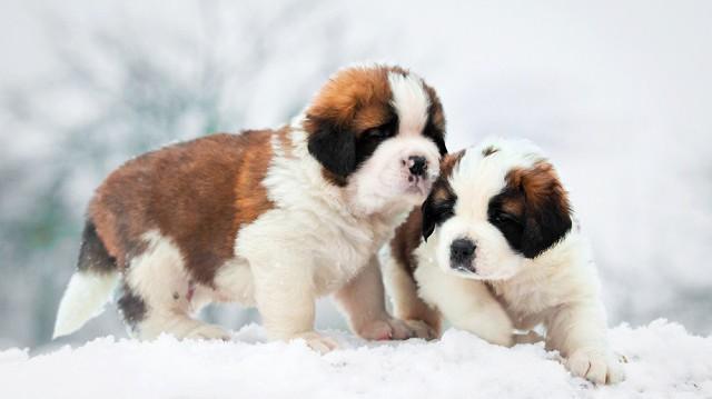 4 tipp a kiskutyák téli védelmére
