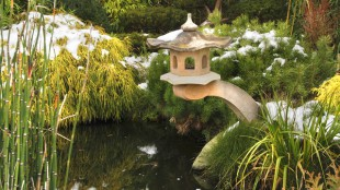 A kerti tó, télen