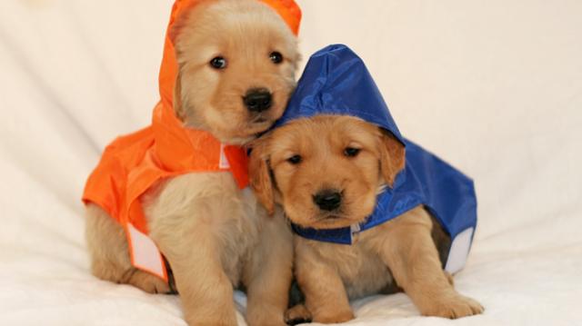 Eső helyett köpönyeg – kutyáknak