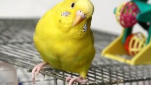 Vigyázat, csíp a madaram!