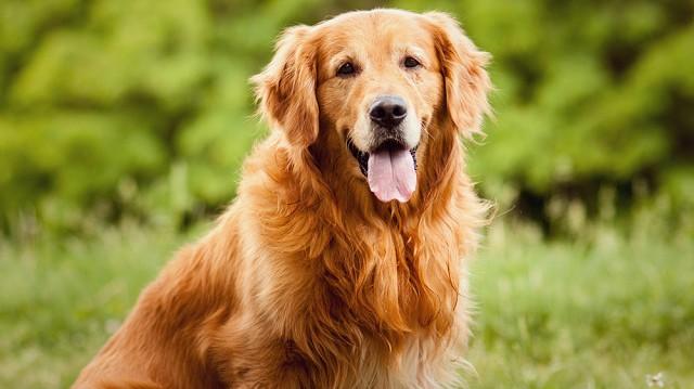 Prémium jutalomfalat kutyáknak