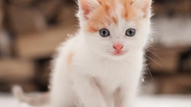 3 tipp a kerti cicák egészségmegőrzésére