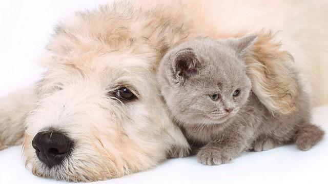 Kutya, macska, egy fedél?